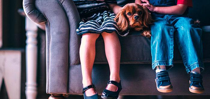 Los beneficios de tener mascotas para los bebés